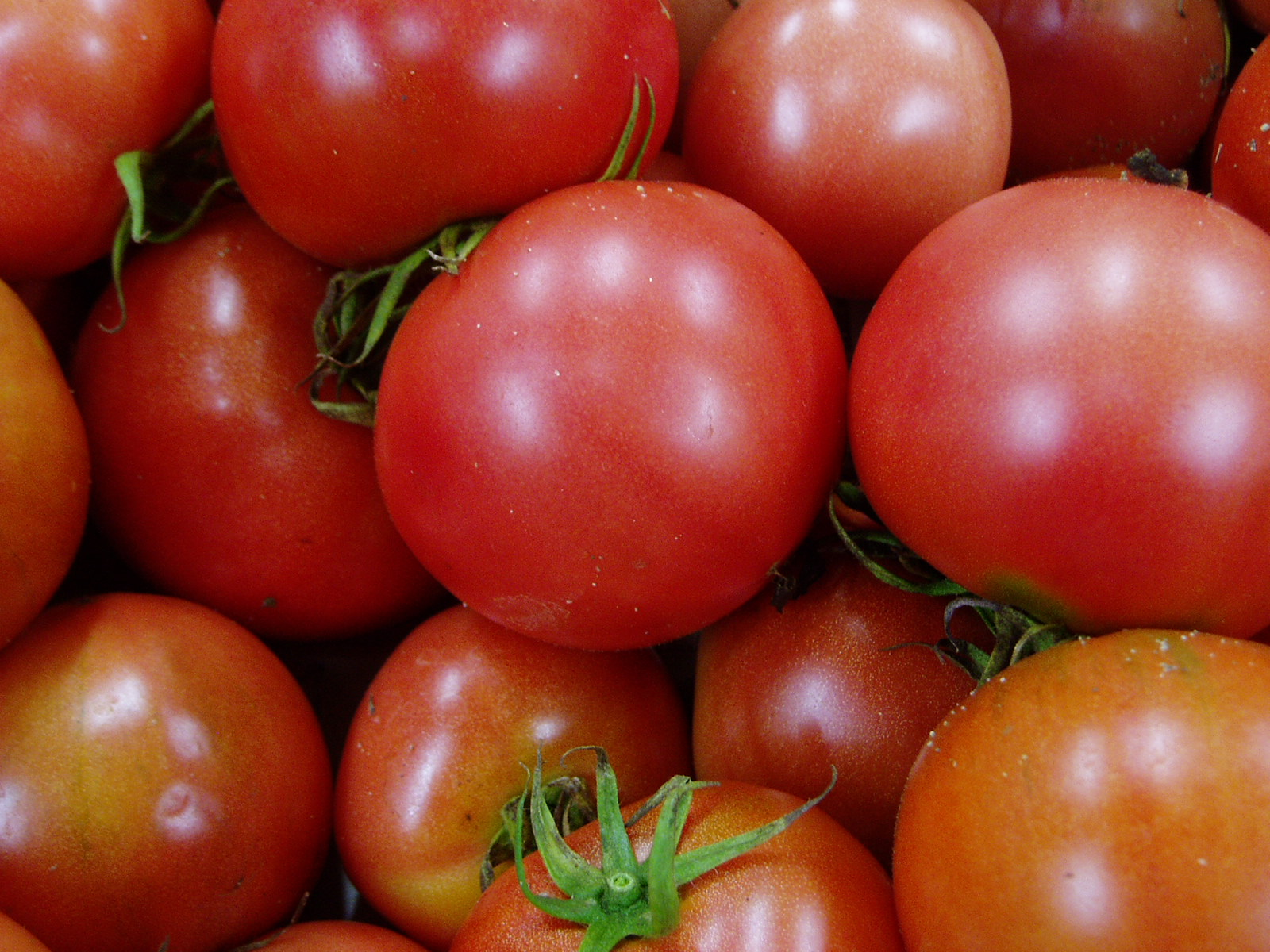 トマトの画像 p1_14